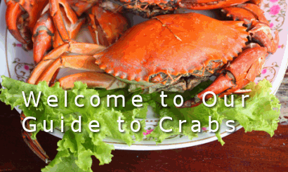 Guide to crabs including nutritional information